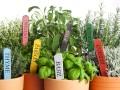 Uvnitř zimní zahrady můžete pěstovat i bylinky, zdroj: shutterstock.com