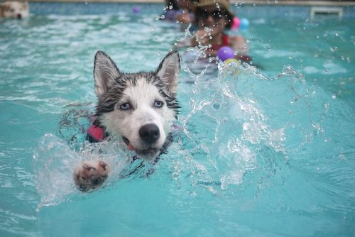 plachty na bazén