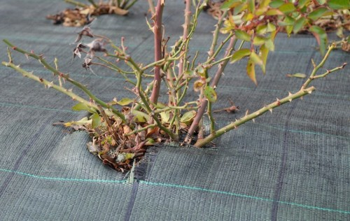 Mulčovací textilie zabraňuje prorůstání trávy