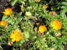 okrasna-zahrada